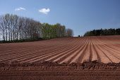 Ploughed Field Under A Blue Sky