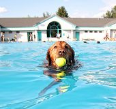 stock photo of mans-best-friend  - a dog having fun at a swimming pool - JPG