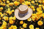 Solar spring midday. The elegant straw hat is left by the tourist in the field of blossoming yellow