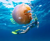 Young lady snorkeling in a clear tropical sea and watching the jelly fish