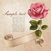 Vintage greeting cards with beautiful rose.