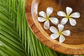 Three white frangipani in wooden bowl of and palm