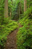 pazifischen Nordwesten Rainforest Pfad