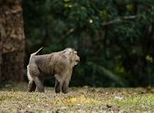 Monkey At Kao Yai National Park