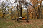 Autumn Leaves , A Wagon, and  Pumpkins
