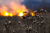 foto of dry grass  - Fire in the field burning dry grass and bushes - JPG