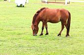foto of horses eating  - Horse eating grass on field in farm - JPG