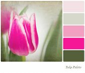 A background tulip flowers in a colour palette,  with complimentary colour swatches. Textured retro style effect.