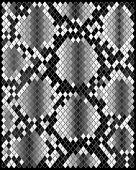 Skin of snake