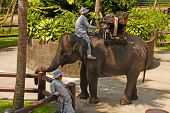 Mahout And Elephant At The Elephant Safari Park,Bali