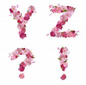 pic of punctuation marks  - Vector spring alphabet with gentle pink sakura flowers letters Y - JPG