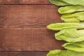 fresh green leaves of romaine lettuce  against a grunge rustic barn wood table with a copy space