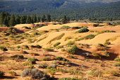 Reserve Coral Pink sand dunes in the U.S.. Low bushes prominently stand out against a pink-orange sand