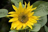 Busy Bee, UK