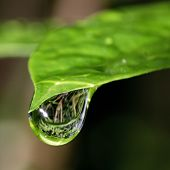 stock photo of raindrops  - Macro photo of one bright green leaf with big reflective raindrop on the top - JPG