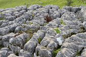 Limestone Pavement At Malham Cove, Yorkshire, England