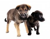 Two funny puppies isolated on white