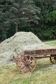 Wagon And Hay