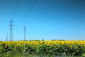 High-voltage power line in the field of sunflowers
