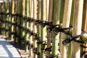 Traditional bamboo fences