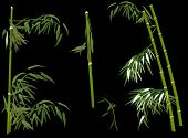 illustration with green bamboo collection on black background