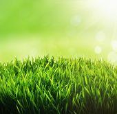 Green grass background. Fresh green grass with blury green bokeh sunny background.