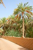 Palm garden in the Al Ain oasis