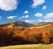 Autumn landscape on a sunny afternoon. Beautiful forest in the mountains