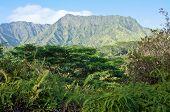 Kauai's Wilderness