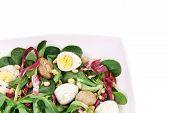 Mushroom salad with pine nuts and radicchio.