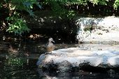 Pond with small rocks