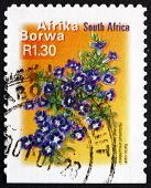 Postage Stamp South Africa 2000 Karoo Violet, Flowering Plant