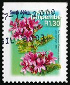 Postage Stamp South Africa 2000 Tree Pelargonium, Flowering Plan