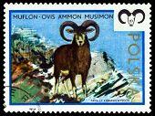 Vintage  Postage Stamp. Moufflon.