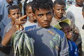 Young fishermen demonstrate catch of the day, Al Hudaydah, Yemen.