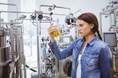 Stylish brunette in denim jacket looking at beaker of beer in the factory