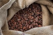 Jute bag full with cocoa beans