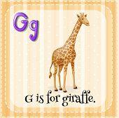 Illustration of an alphabet G is for giraffe