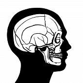 Human Head With Skull