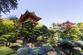 vegetation and trees in a japanese garden