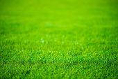 Grass Field Defocused
