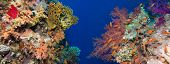 image of offshore  - Colorful underwater offshore rocky reef with coral and sponges and small tropical fish swimming by in a blue ocean - JPG