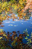 Blue Sky Reflected On Still Pond