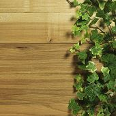 Wooden board covered in ivy