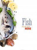 Fresh Dorado Fish And Seafood