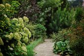 beautiful summer garden view with blooming hydrangea and stone pathway