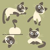 stock photo of siamese  - Set of Siamese cats in different poses - JPG