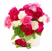 picture of bunch roses  - bunch of pink  ranunculus and rose flowers in pot  isolated on white background - JPG