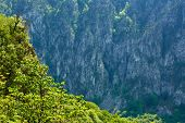 pic of afforestation  - Beautiful landscape with high mountains on springtime - JPG