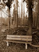 Lonely Bench In The Woods In Sepia